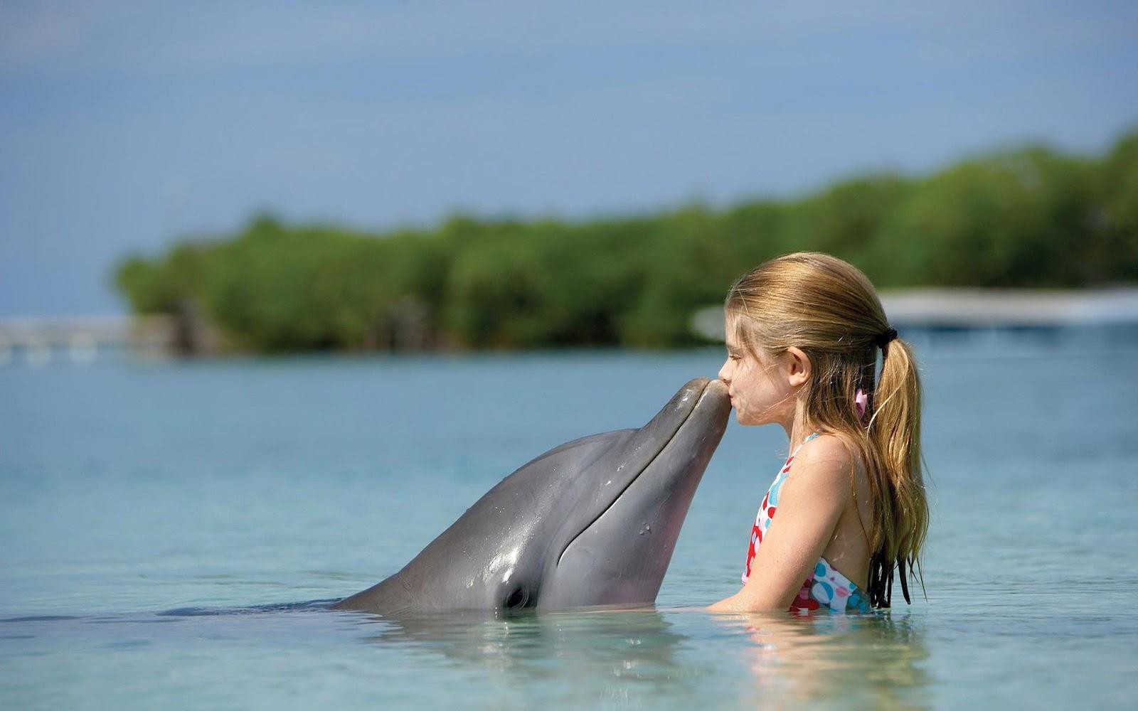 Риф дельфинов