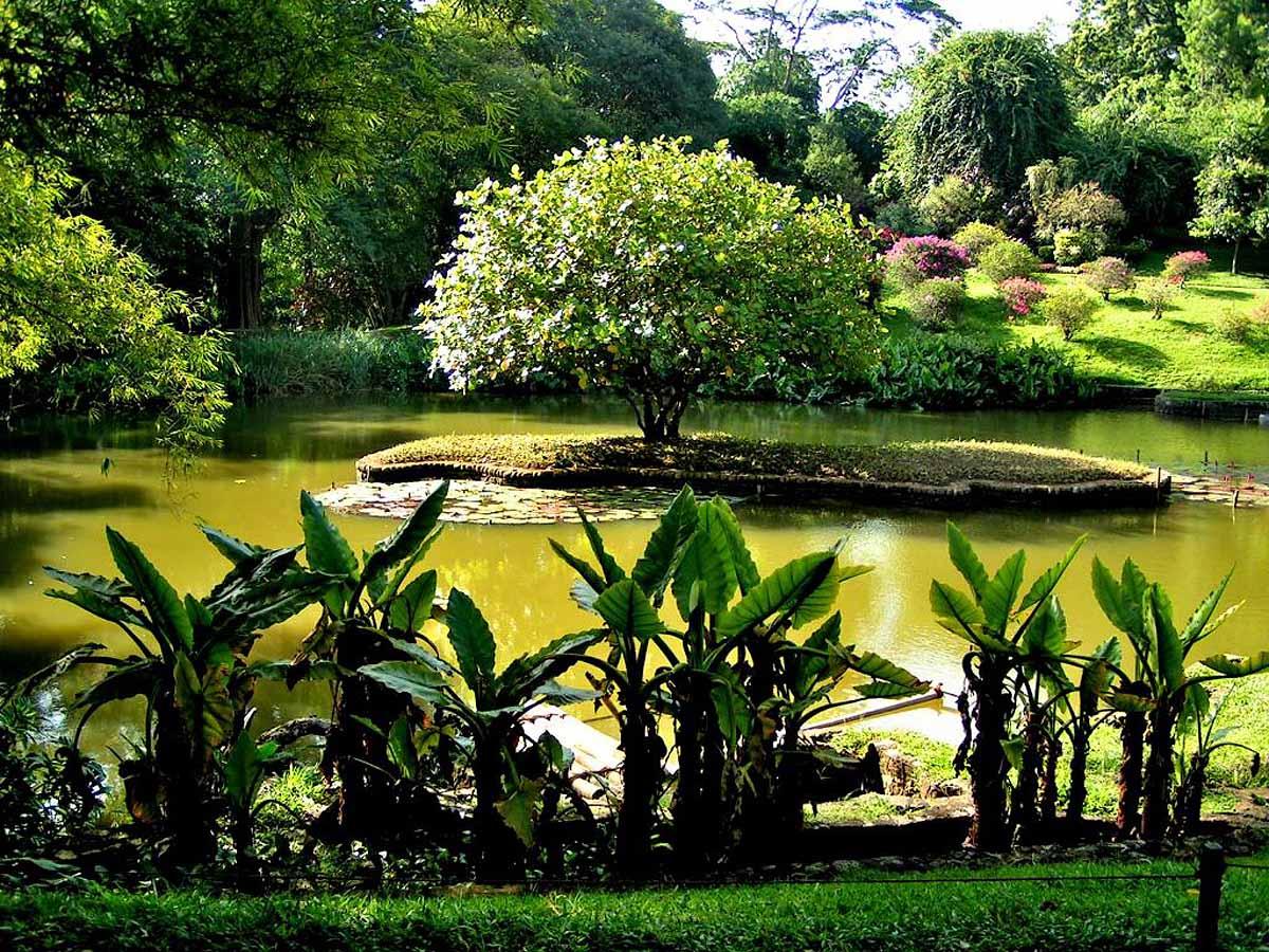 Ботанический Сад Памплемуспарк
