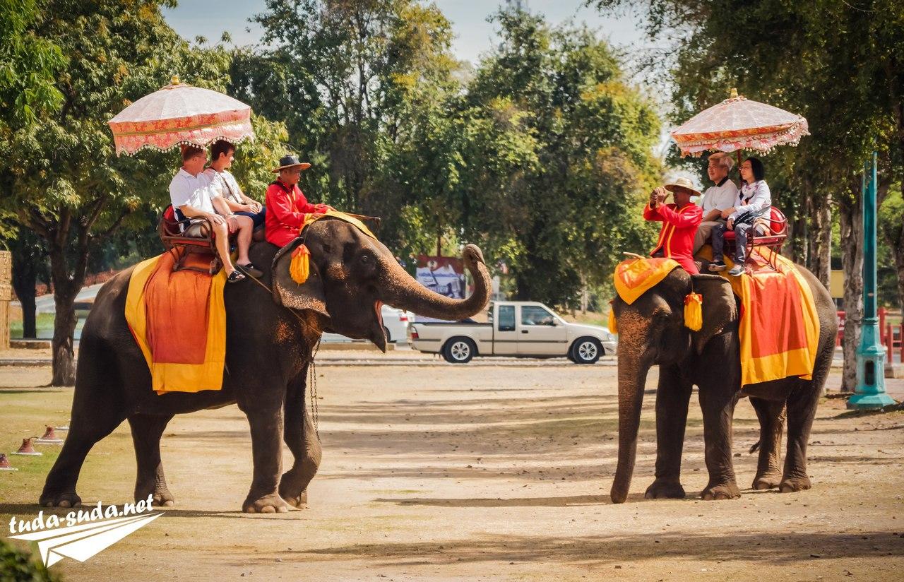 Слоні