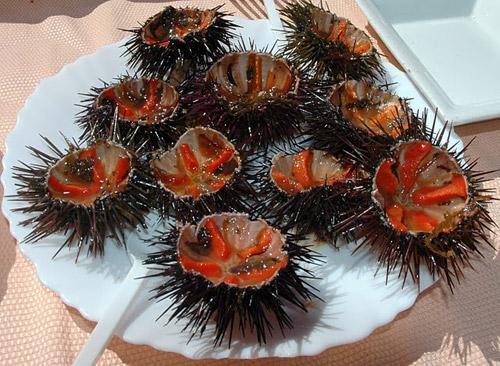 Морских ежей едят сырыми