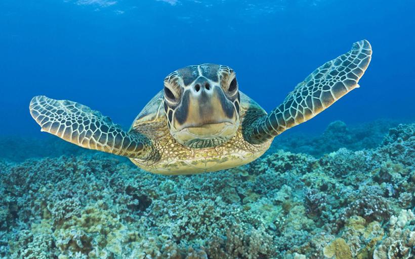 черепахи в Доминикане