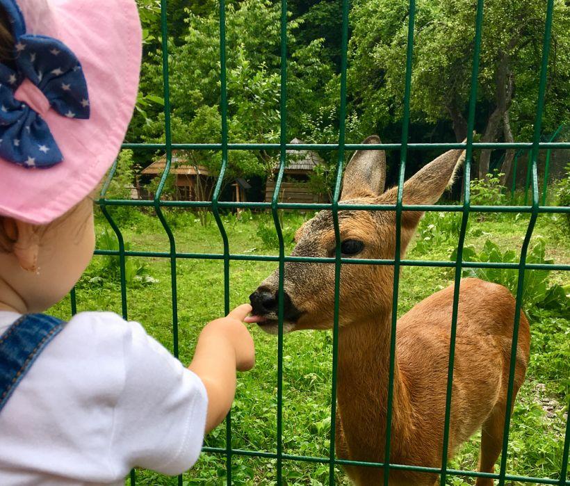 Мини-зоопарк в музее «Шевченковский гай»