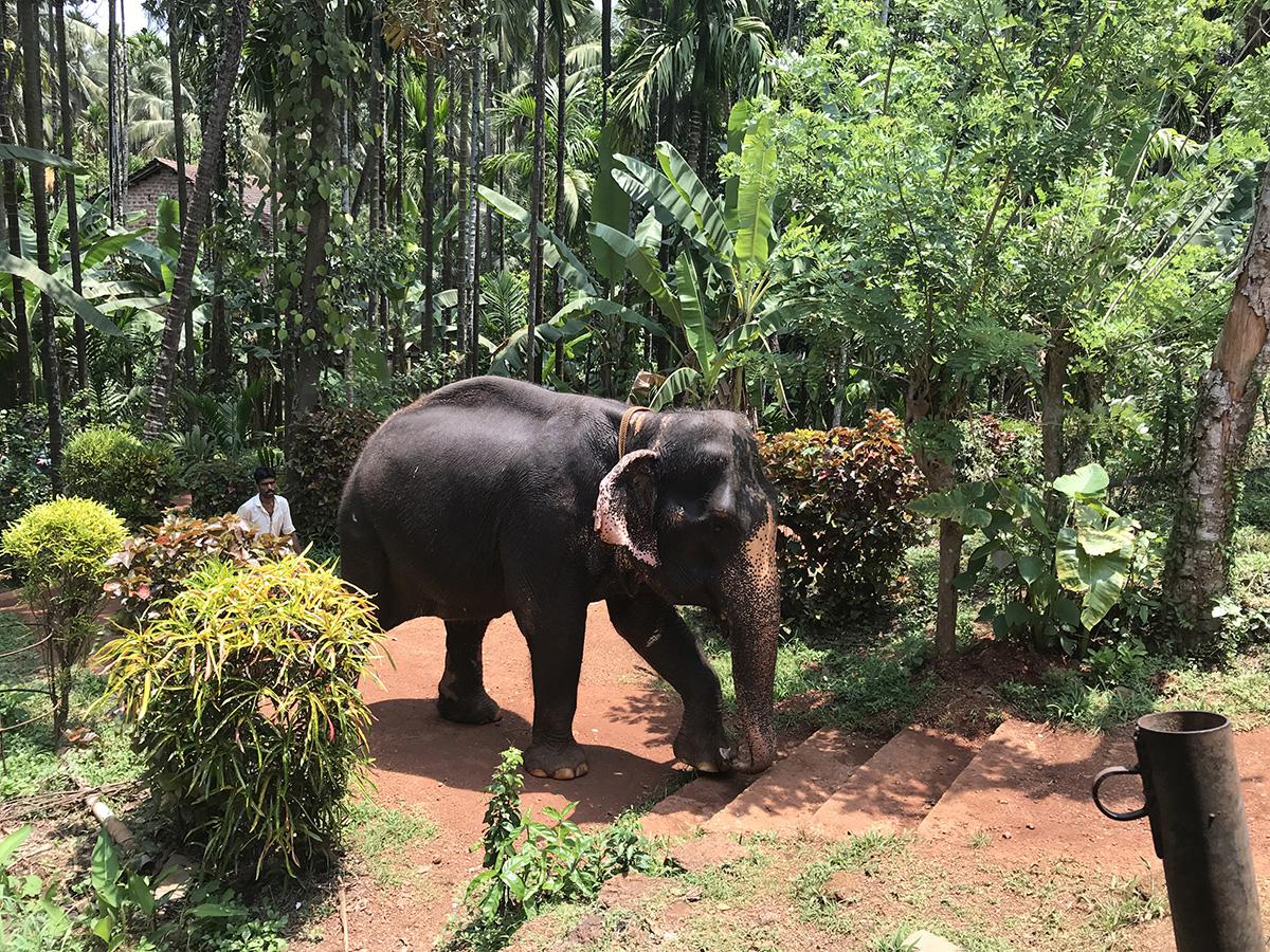 Где посмотреть слонов в Гоа