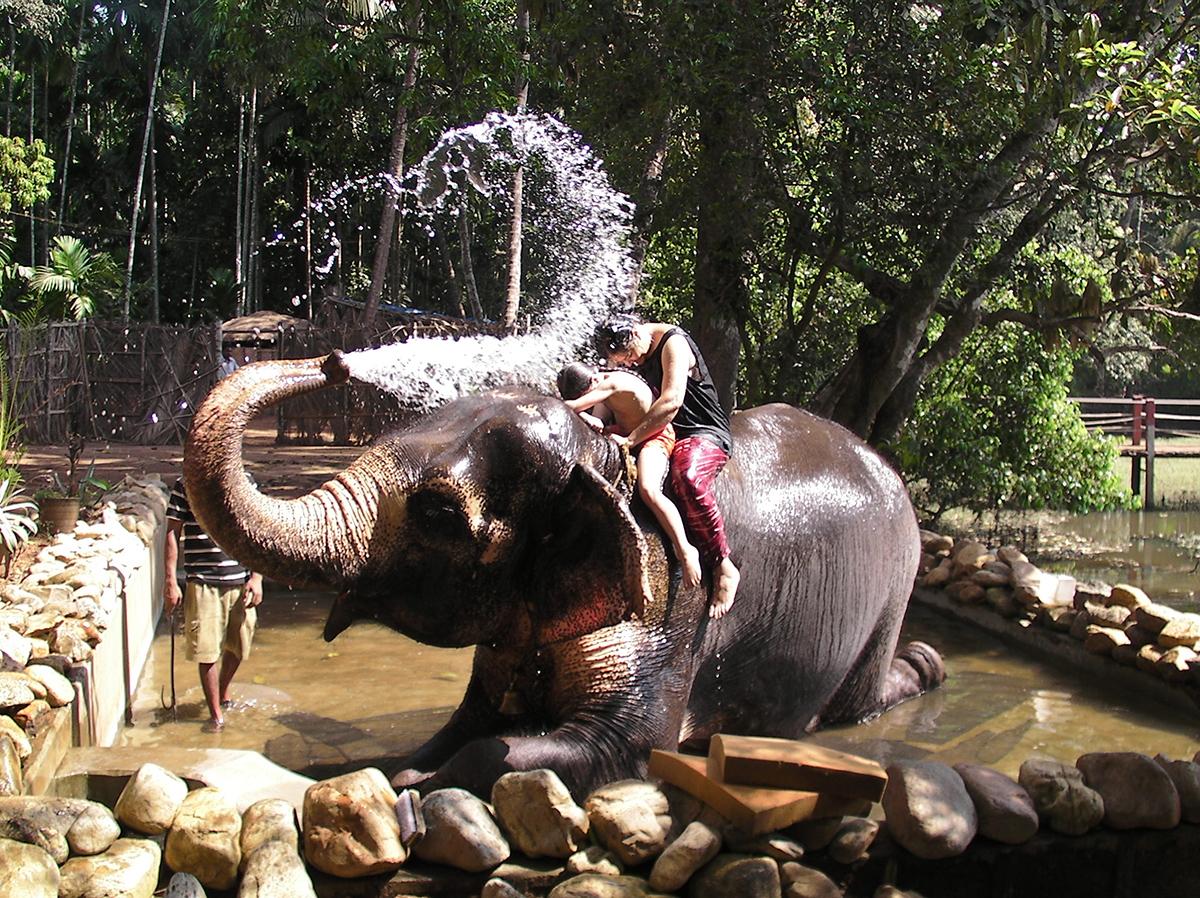 Слоны в Бхагван Махавире
