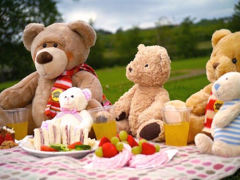 Тедди-пикник в Ботсаду