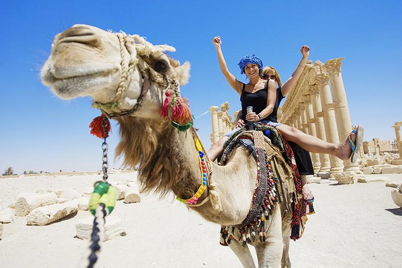 Катание на верблюдах в Египте