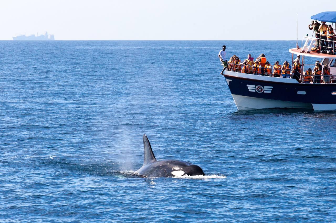 Наблюдение за китами в Кальпитии