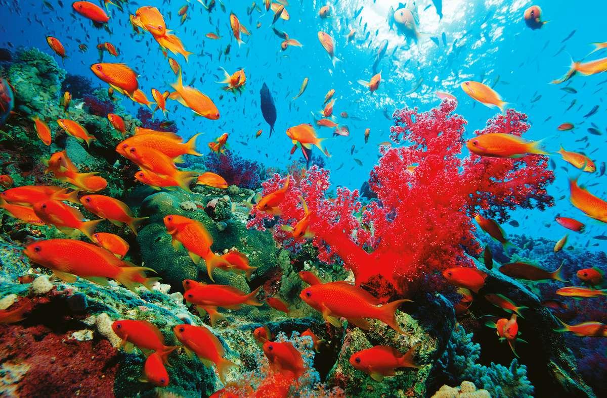 Водоросли в Красном море