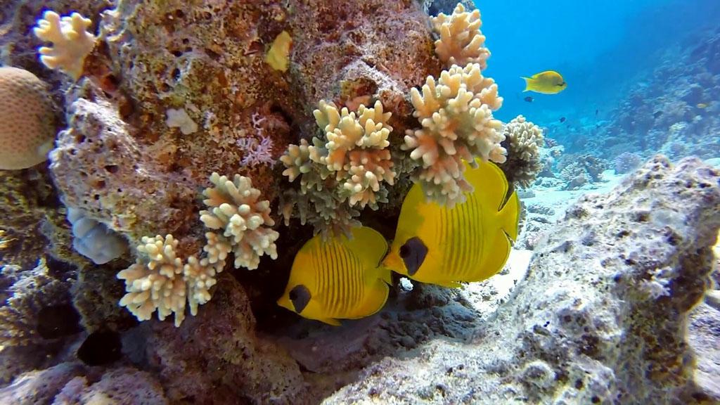 Рыбы и кораллы в Красном море