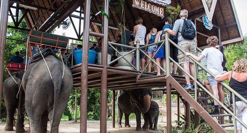 Сафари на слонах, Самуи
