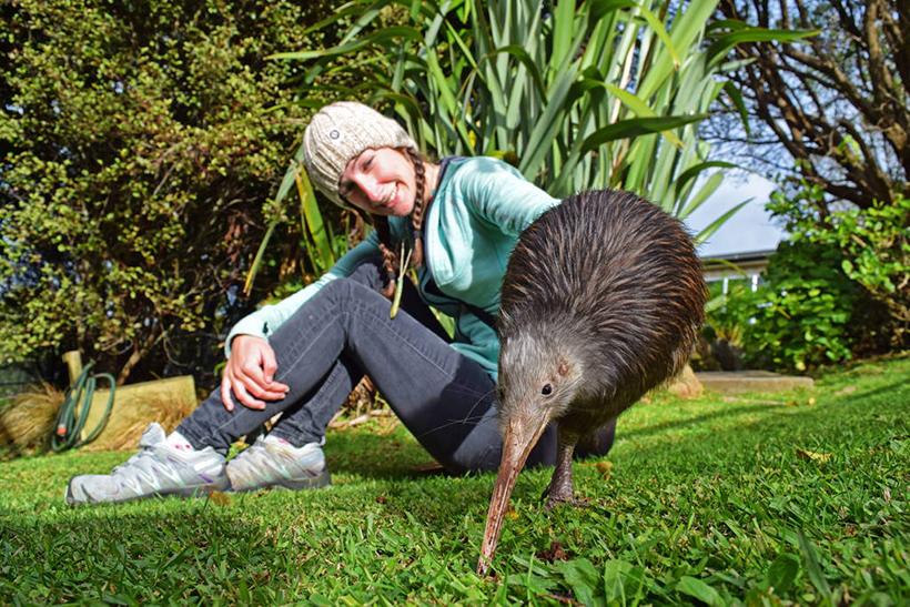 Птица Киви, Новая Зеландия