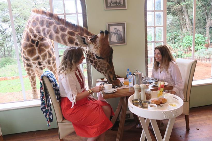 Завтрак с жирафом в отеле The Giraffe Manor, Найроби, Кения
