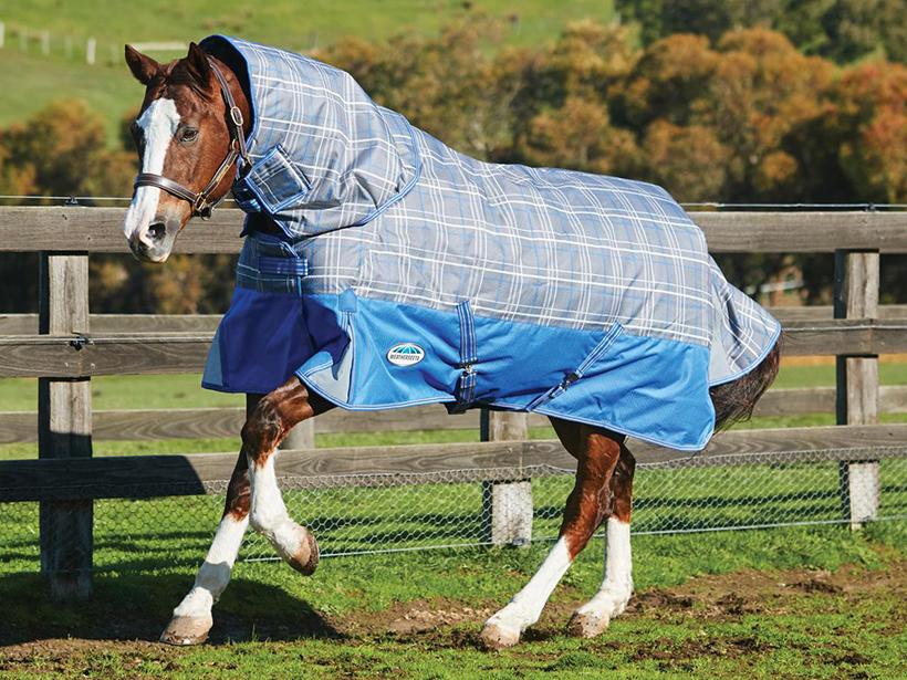 Лошади в попонах