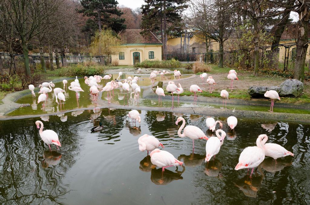 Фламинго в зоопарке Шёнбрунна