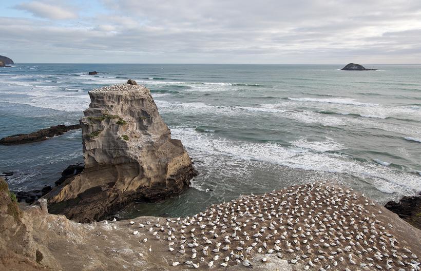 Олуши на пляже Муривай