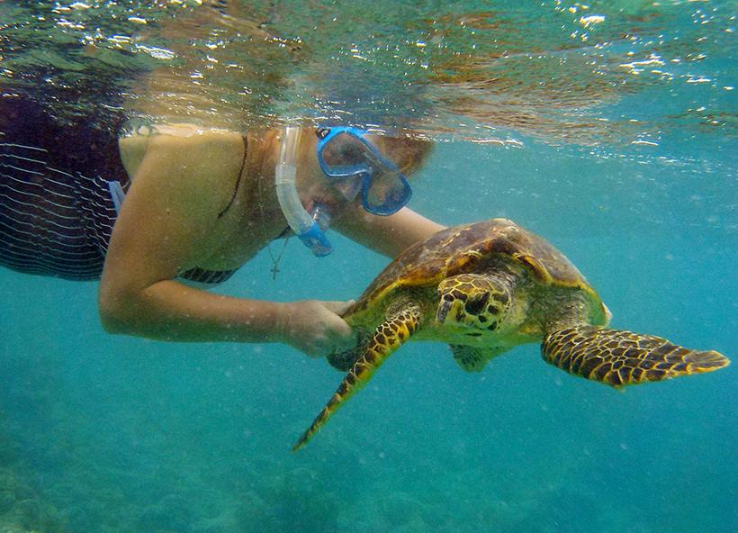 черепахи на Мальдивах