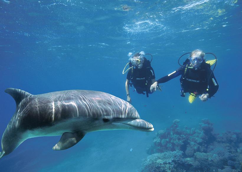 Дельфиний риф, дайвинг