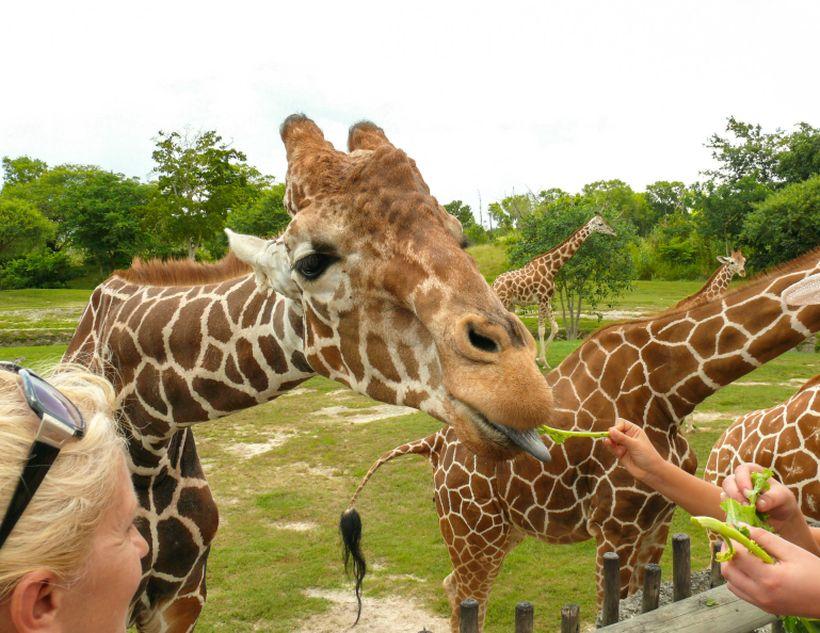 Зоопарк в Майями