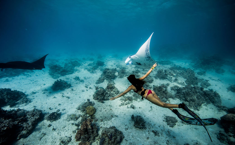 Плавание с мантами на Бали