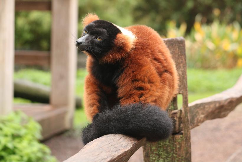 животные в ARTIS zoo