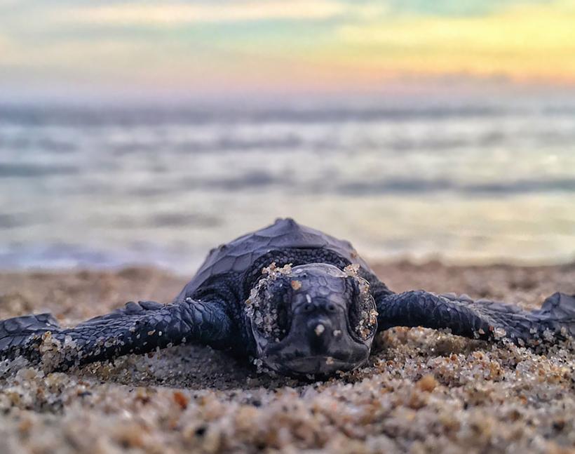 Детеныш черепахи