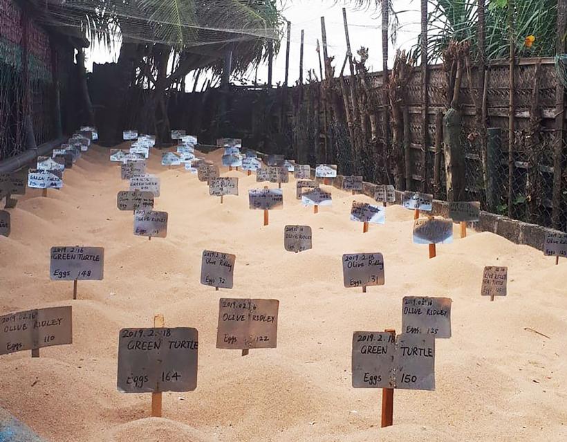 Черепаховые центры Шри-Ланки