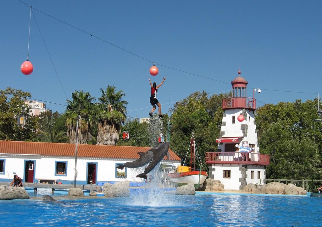 Шоу дельфинов в зоопарке Лиссабона