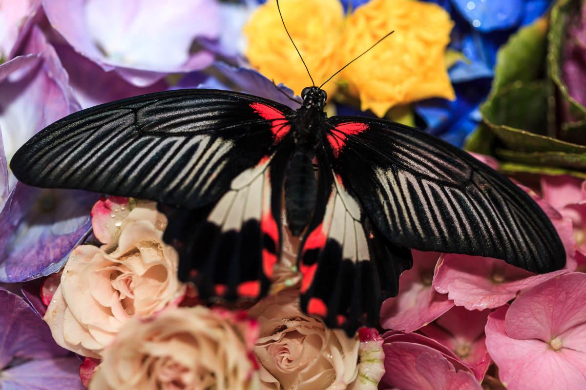 Парк бабочек Дубаи
