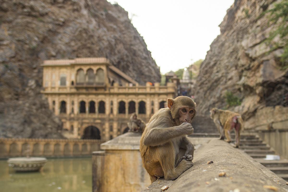 Храм Галтаджи или Храм обезьян