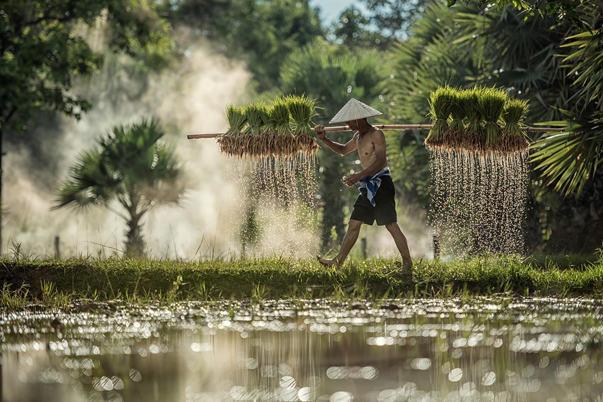 Фермер в Камбоджі
