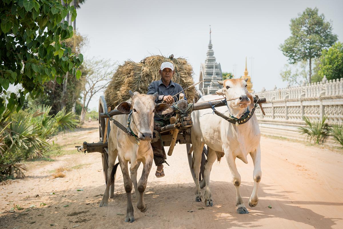 Фермери в Камбоджі