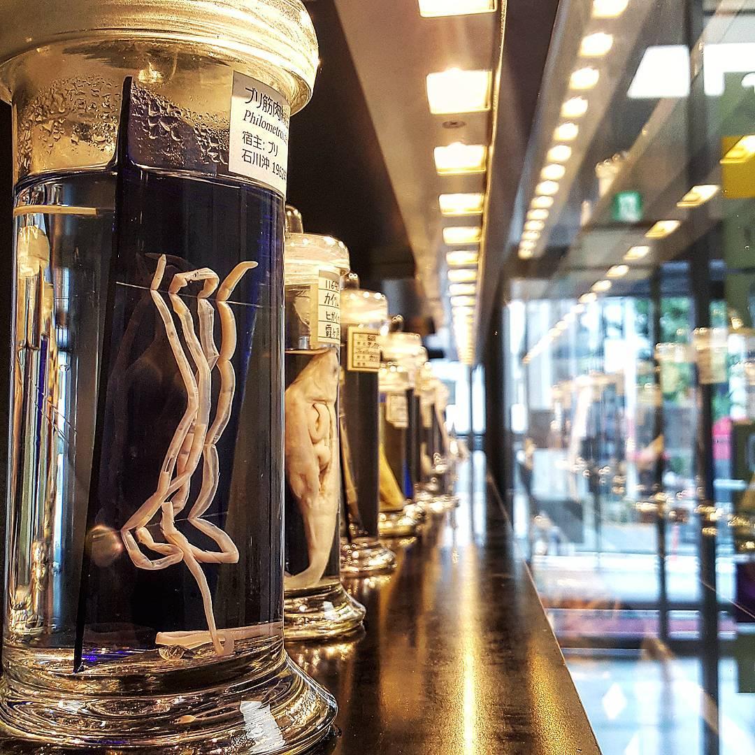 Музей паразитологии, Токио